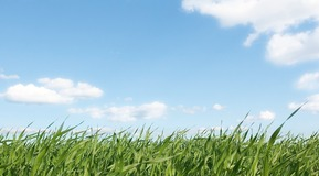 Summer scene of blue skies and green grass